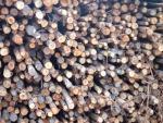 เสาเข็มยูคา - บริษัท เอกวัฒนาค้าไม้ จำกัด