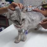 รักษา แมว พัทลุง - คลินิกรักษาสัตว์ พัทลุง ยุทธชาติรักษ์สัตว์