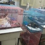 รับฝากสัตว์ พัทลุง - คลินิกรักษาสัตว์ พัทลุง ยุทธชาติรักษ์สัตว์