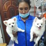 รักษา หมา พัทลุง - คลินิกรักษาสัตว์ พัทลุง ยุทธชาติรักษ์สัตว์