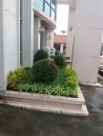 รับออกแบบจัดสวน ปทุมธานี - รับปูหญ้า จัดสวน ไร่หญ้า จ๋า หรือ มนู