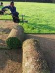 รับเหมาปูหญ้า อยุธยา - รับปูหญ้า จัดสวน รังสิต ปทุมธานี