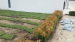 ขายส่งหญ้า รังสิต - รับปูหญ้า จัดสวน รังสิต ปทุมธานี