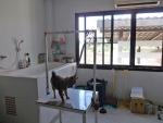 โรงพยาบาลสัตว์นภัคสิริ อ วังน้ำเขียว