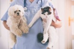 รับฝากเลี้ยง อาบน้ำตัดขน สระบุรี - โรงพยาบาลสัตว์เมืองเพรียว สระบุรี