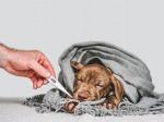 รักษาสุนัข สระบุรี - โรงพยาบาลสัตว์เมืองเพรียว สระบุรี