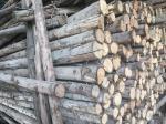 S__11198476 - ไต้ฮั้วค้าไม้ พัฒนาการ