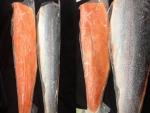 ปลาแซลม่อล - ร้าน วัตถุดิบซูชิ