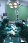 ผ่าตัดกระดูก นครราชสีมา - โรงพยาบาลสัตว์บ้านหมอต้น