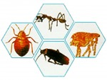 บริษัท รับ กำจัด มด แมลงสาบ เห็บ หมัด - Termite control Kanchanaburi