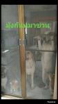 มุ้งลวดกันหมาข่วน - มุ้งลวดราคาถูก นนทบุรี ศักดิ์การช่าง
