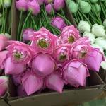 ดอกไม้ประดิษฐ์ พิษณุโลก