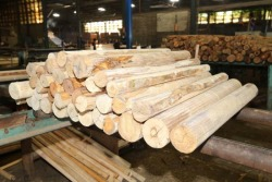 ไม้อัดบางนา - บริษัท สินเจริญ วีเนียร์ แอนด์ พลายวู้ด จำกัด