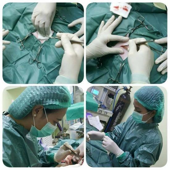 ศัลยกรรม ศัลยกรรม  ทำหมัน  ผ่าตัดกระดูก  ผ่าคลอด