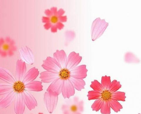 ร้าน สุปรีดา ฟลอร่า ดอกไม้สด-แห้ง