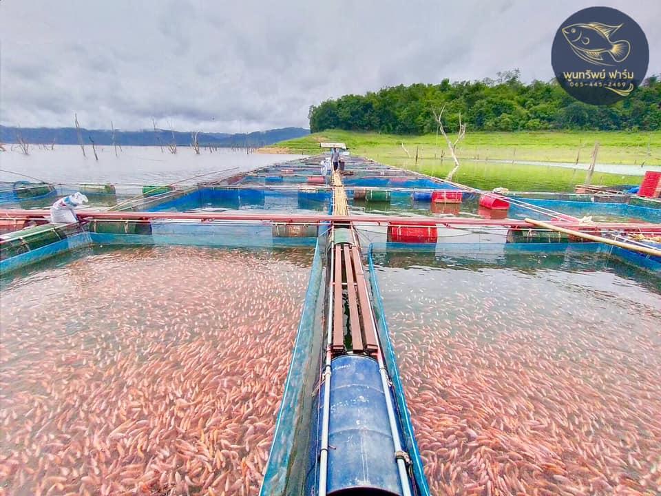 พูนทรัพย์ฟาร์ม-ฟาร์มปลา