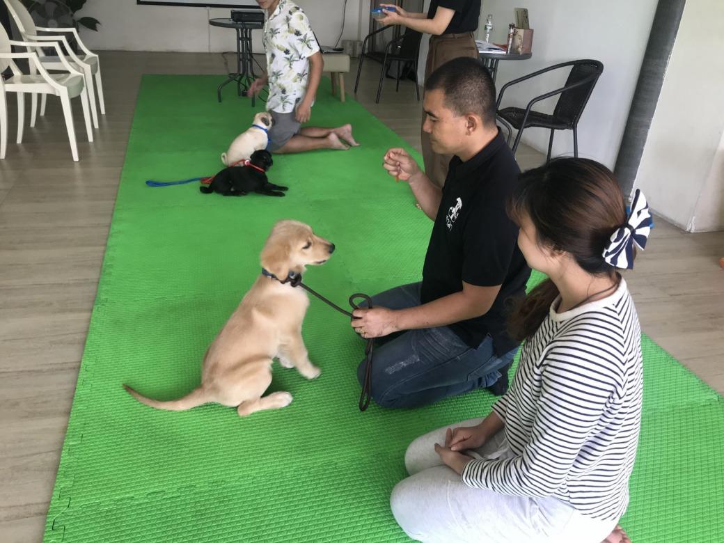 รับฝึกสุนัข ร่มเกล้า